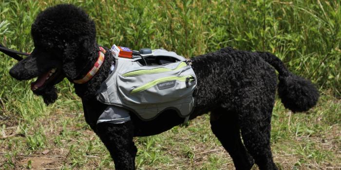 災害救助犬の活性度(情動)を遠隔モニタリングする技術を開発 サイバースーツに搭載し、サイバー救助犬による被災者捜索活動を支援