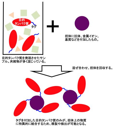 アフィニティータグシステムの例